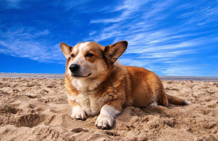 Ein dicker Hundemantel schützt vor der Hitze: Mythos oder Wahrheit?