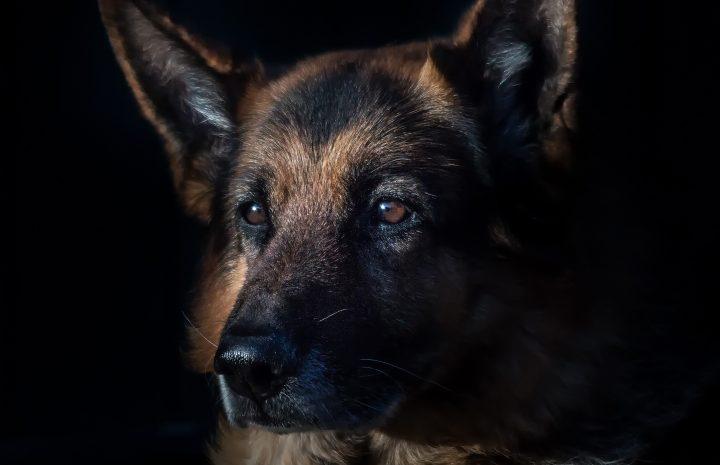 Wie lange kann ein Hund im Auto bleiben?