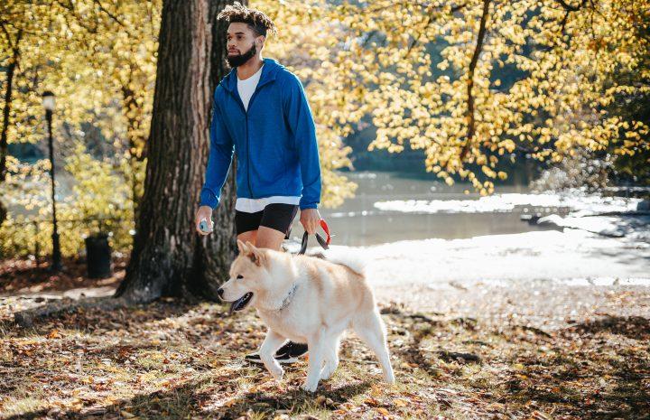 Warum vergießen Hunde?